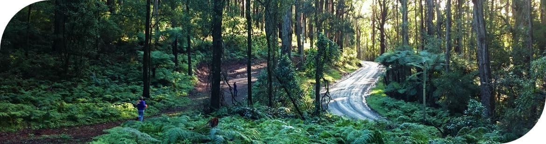 Olinda hike to Skyhigh, Mt Dandenong