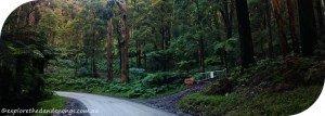 Mount Dandenong Circuit Walk