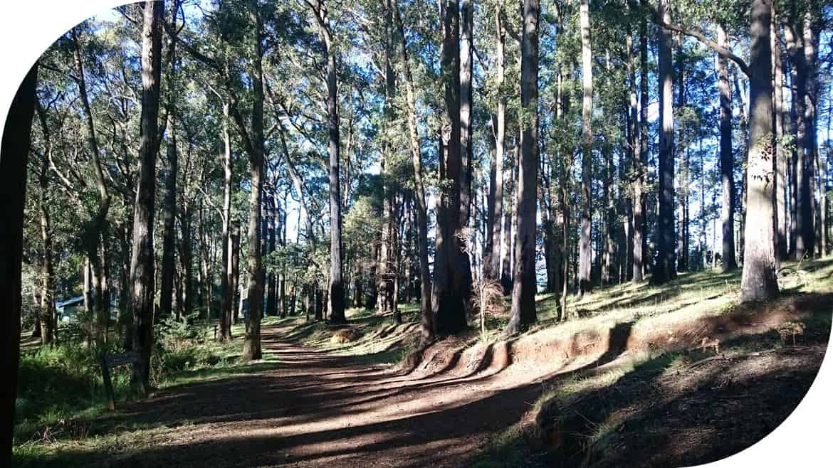 Western Slopes Walk Mt-Dandenong