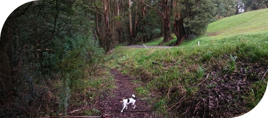 Dog-friendly-walks-dandenong-ranges (13)