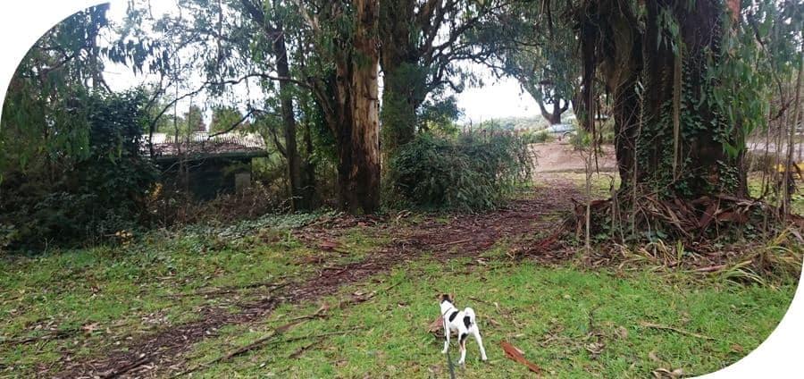 Dog-friendly-walks-dandenong-ranges (14)