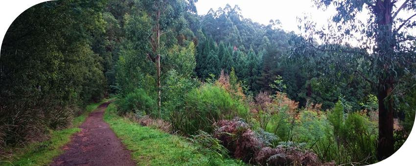 Dog-friendly-walks-dandenong-ranges (4)