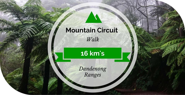 Mountain Circuit Walk - Dandenong Ranges