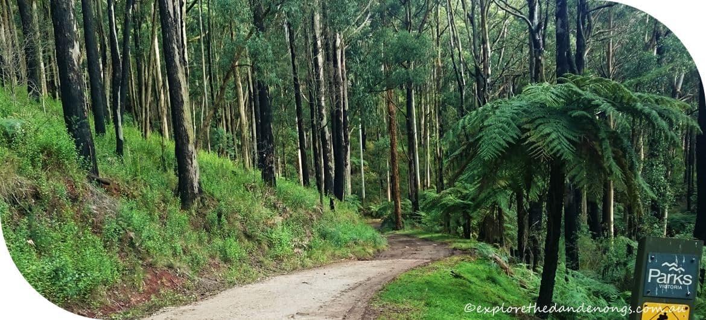 Sherbrooke - Sassafras to SkyHigh, Mt dandenong Walking Trail