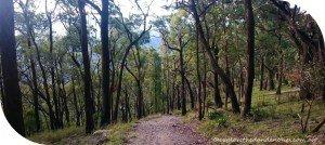 Trig-Track-Mount-Dandenong