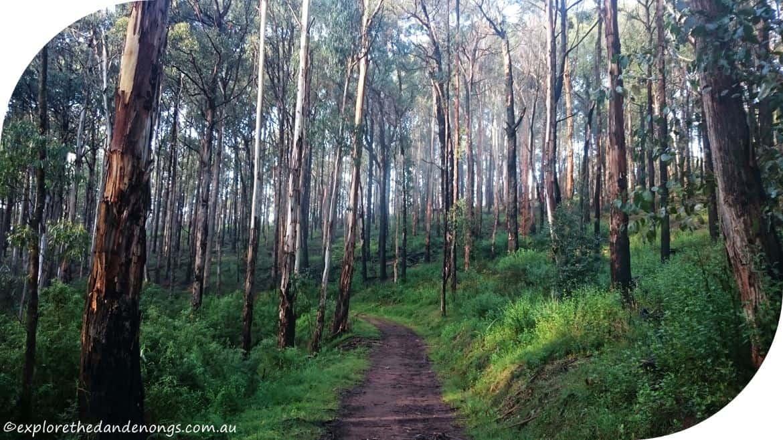 True Grit Walking Track Dandenong Ranges