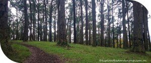 Western-Slopes-Walk-Mt-Dandenong