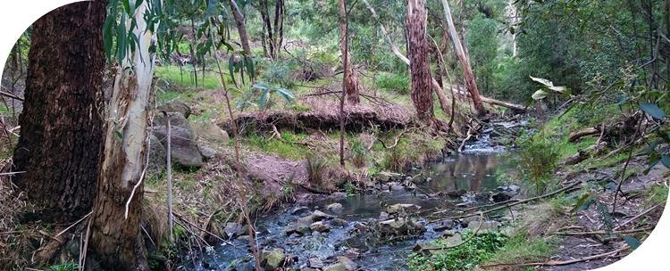 Ferny Creek Walking Track