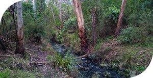 Glenfern Valley walk, passing by Ferny Creek.