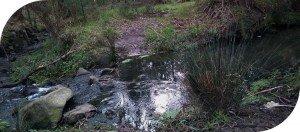 Ferny Creek, Dandenong Ranges
