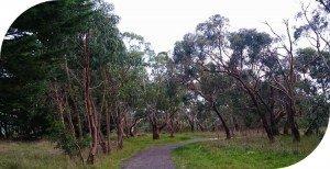 Glenfern Valley Bushlands Reserve, dog friendly walking tracks.