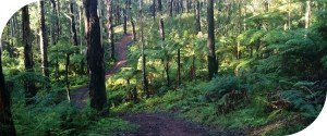 Tru Grit Walking Track Dandenong Ranges