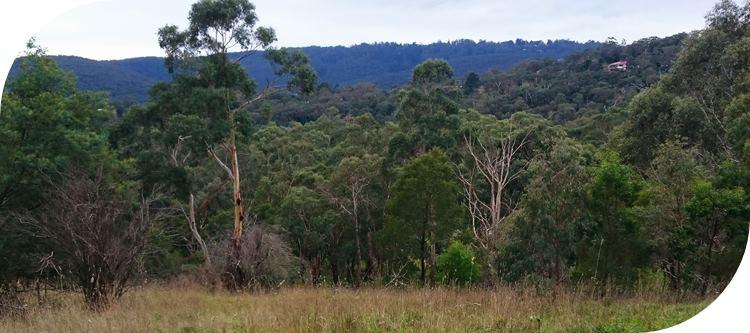 Glenfern Valley Bushlands