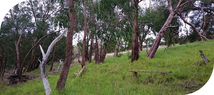 Glenfern Valley Bushlands Reserve. Plenty of seating to allow people to rest and enjoy the beauty.