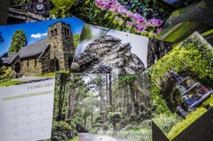 Dandenong Ranges Photography