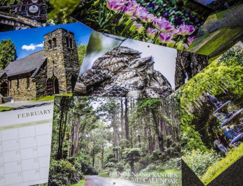 Dandenong Ranges Nature Photography