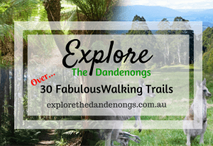 Over 30 Fabulous Walking Trails in the Dandenong Ranges