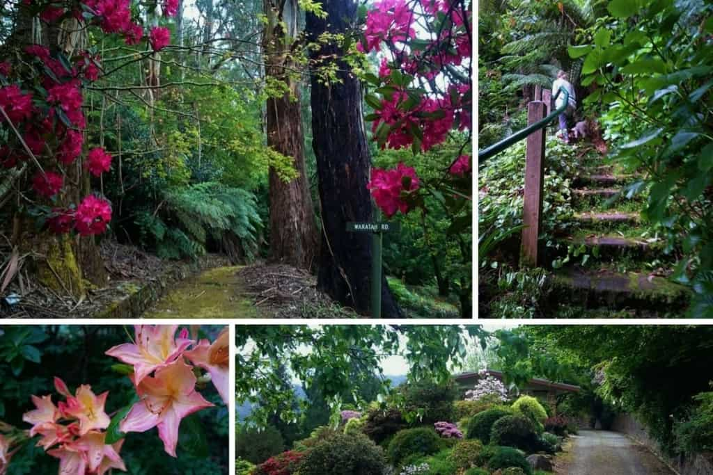 Pirianda Gardens, Olinda, Dandenong Ranges