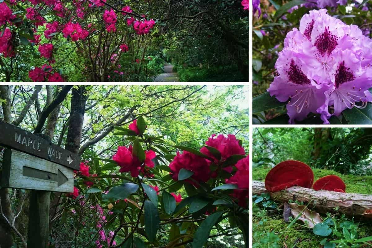 pirianda-gardens-2