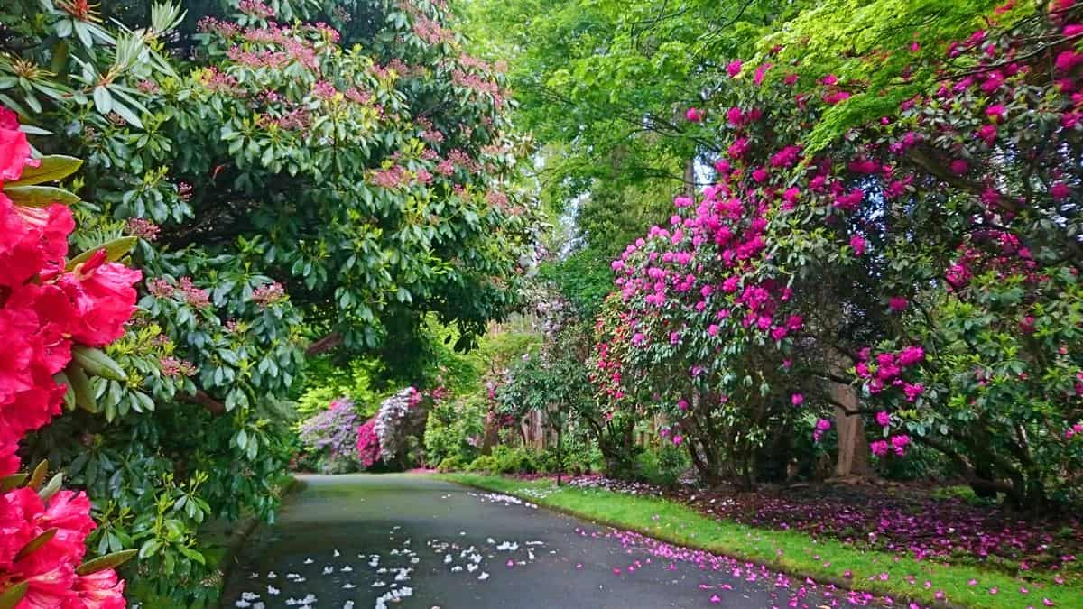 alfred-nicholas-gardens-sherbrooke-25