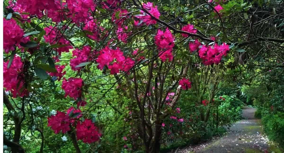 Gardens of the Dandenong Ranges