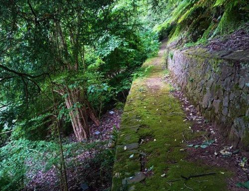 Pirianda Gardens – A Hidden Gem in the Hills