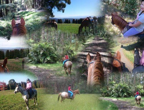 Horse Riding Trails near Melbourne