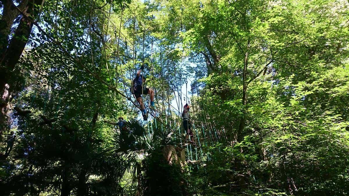 Trees Adventure Park Belgrave - Tree Surfing at Glen Harrow Park
