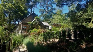 Trees Adventure Park Belgrave - The Botanist Cafe