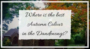 Where to see Autumn colour in the Dandenongs