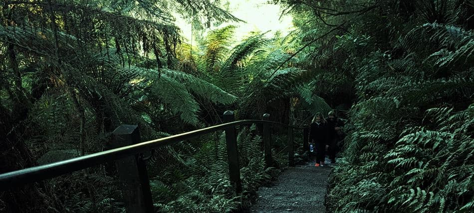 One Thousand Steps Walking Track, Dandenong Ranges, Near Melbourne