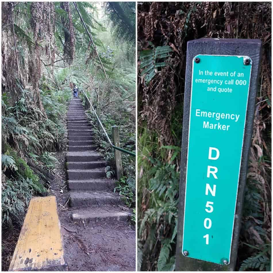 Are there really 1000 Steps on the hiking trail in the Dandenong Ranges?