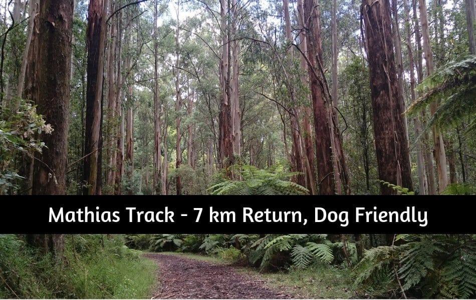 Mathias Track Dandenong Ranges - Dog-friendly walking track