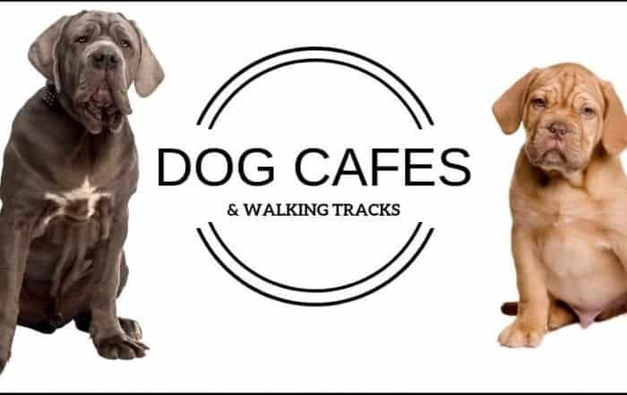 Dog Cafe Melbourne