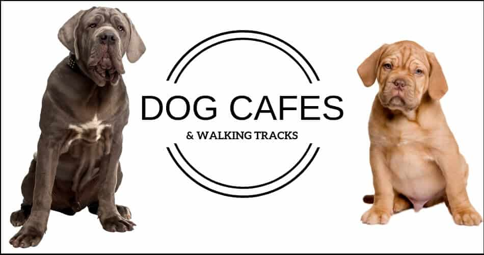 Dog Cafe Melbourne