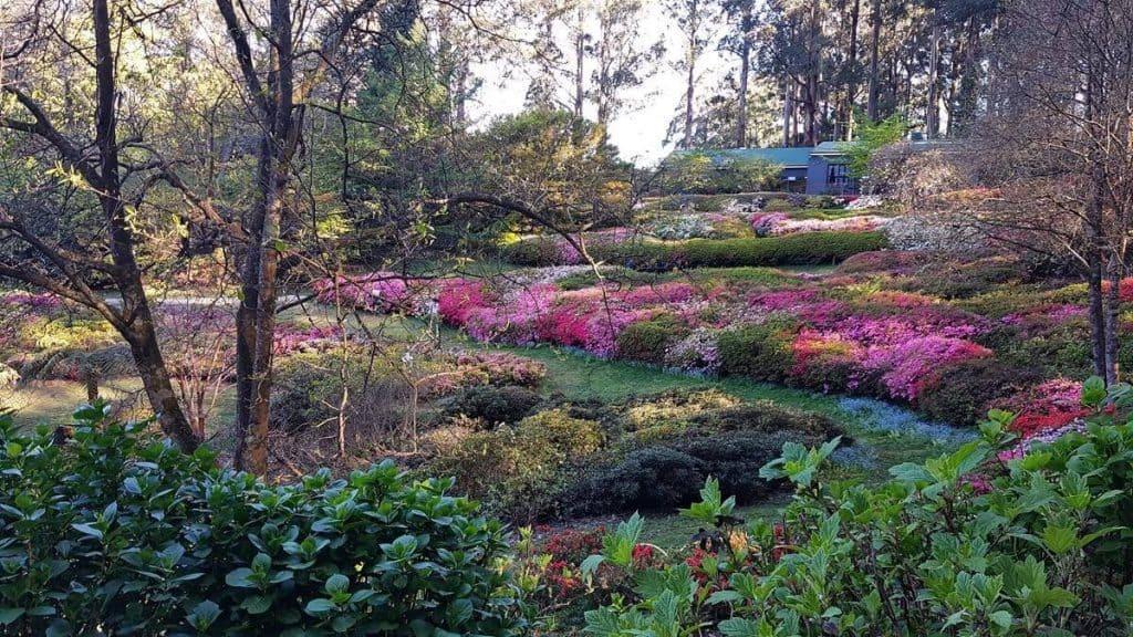 Rhododendron Garden, Dandenong Ranges, Melbourne