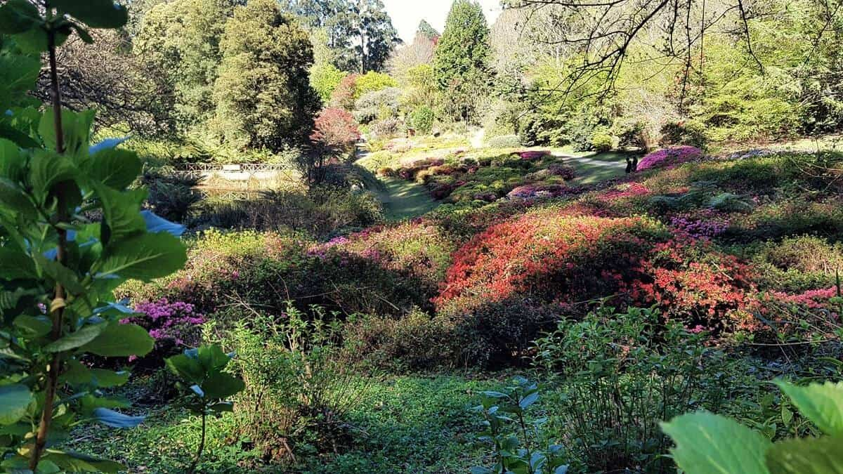 Dandenong Ranges Botanic Garden, Olinda