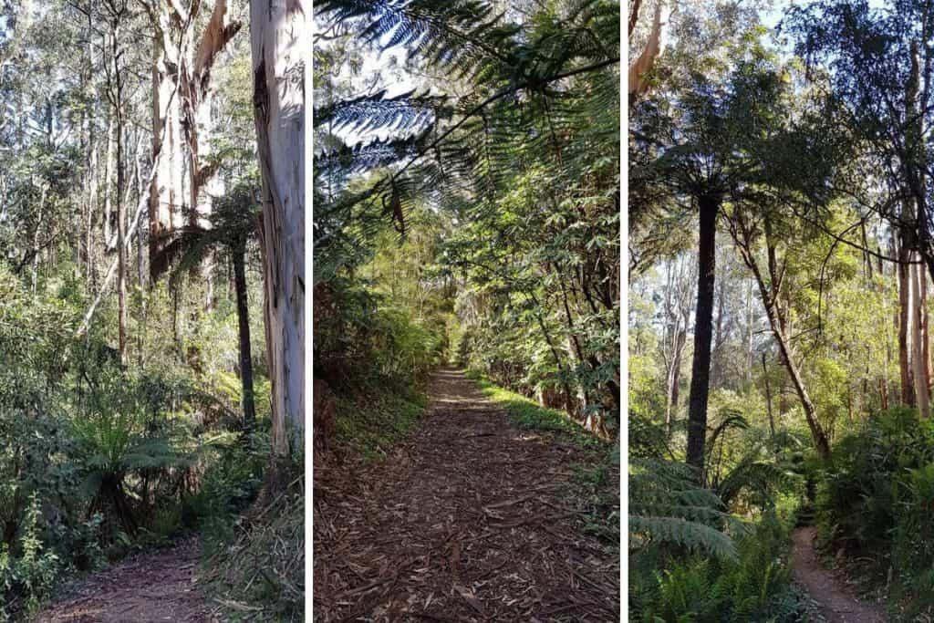 Tree Fern Gully walk in the Dandenong Ranges Botanic Garden, Olinda.