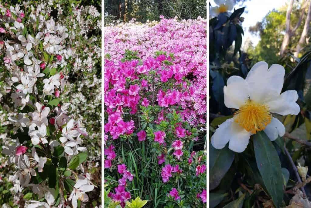 Spring flowers in the Dandenong Ranges Botanic Gardens, Olinda, near Melbourne