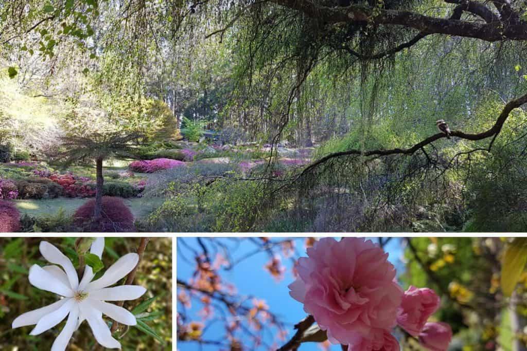 Ornamental lake and spring flowers at the Dandenong Ranges Botanic Garden, Olinda