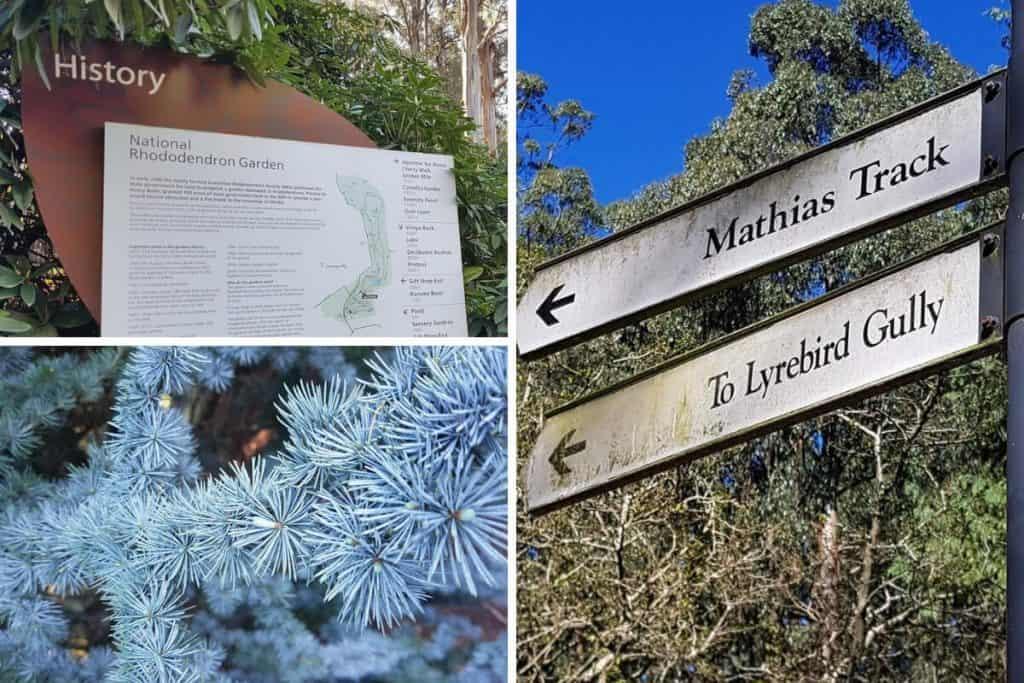Mathias Track & Lyrebird Gully Walk in the Dandenong Ranges Botanic Garden, Olinda