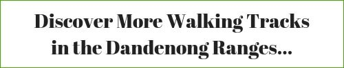 Discover More Walking Tracks in the Dandenong Ranges - Click here...