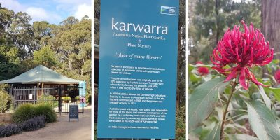 Kawarra Australian Native Plants and Trees Kalorama