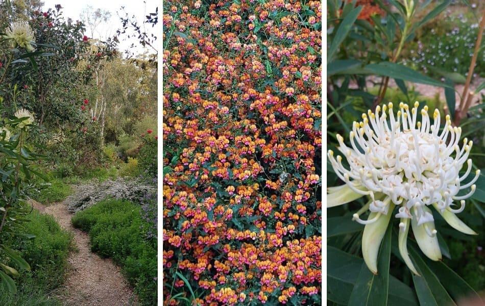 Kawarra Australian Native Plants and Trees Kalorama