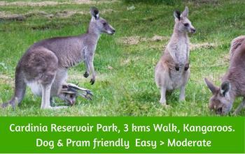 Cardinia Reservoir, Crystal Briook Park. Picnics and kangaroos,Dandenong Ranges