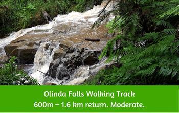 Olinda Falls Walking Track Dandenong Ranges