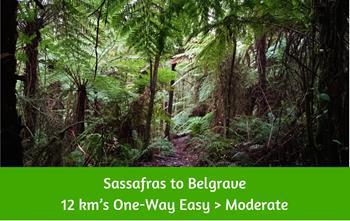 Sassafras to Belgrave Bushwalk. 12 kms. Dandenong Ranges