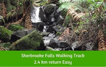 Sherbrook Falls Walking Track Dandenong Ranges
