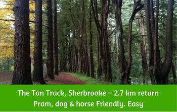Tan Track Walk,Sherbrooke, Dandenong Ranges
