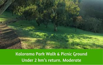 Kalorama Park Walking Track and picnic ground Dandenong Ranges